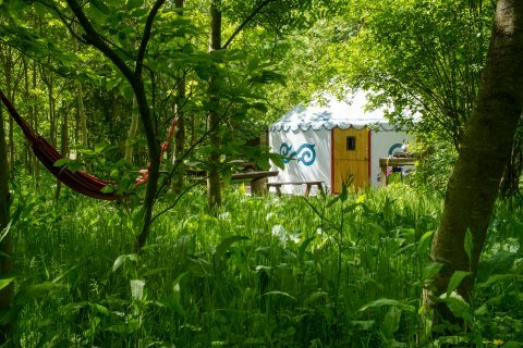 team building away day-yurt glaming time in nature woodland plush tents glamping